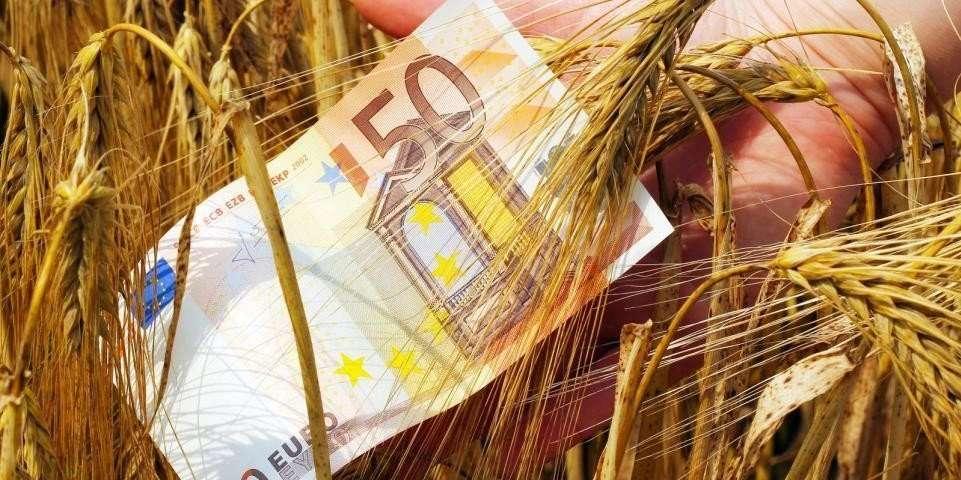 billete de 50 € en campo de trigo