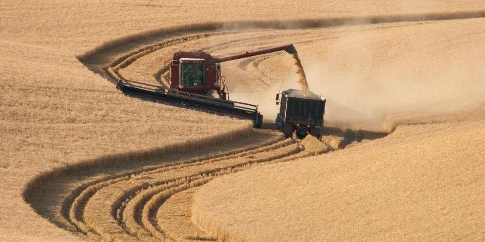 cosechadora descargando trigo en remolque