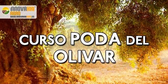curso poda del olivar