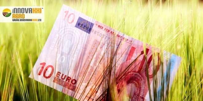 trigo con billete de 10 euros