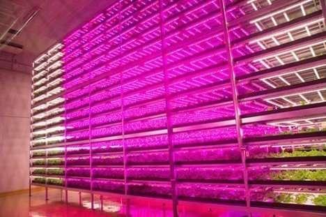 granja-indoor-2