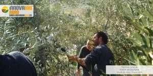 Curso poda de olivar Alcala del Valle
