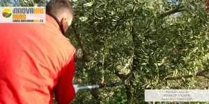 curso poda de olivar Aguadulce