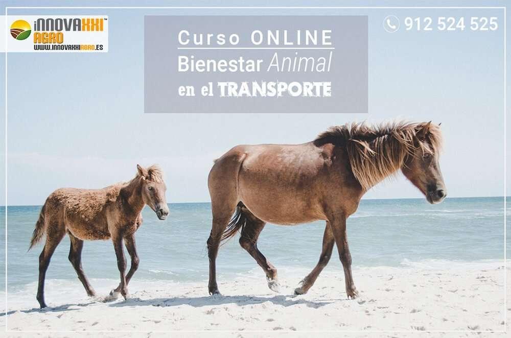 CURSO ONLINE BIENESTAR ANIMAL EN EL TRANSPORTE