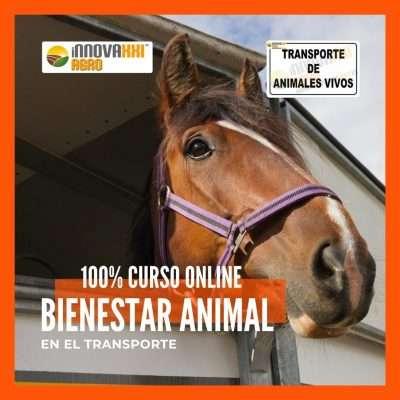 Curso Online Bienestar Animal en el Transporte de animales Vivos